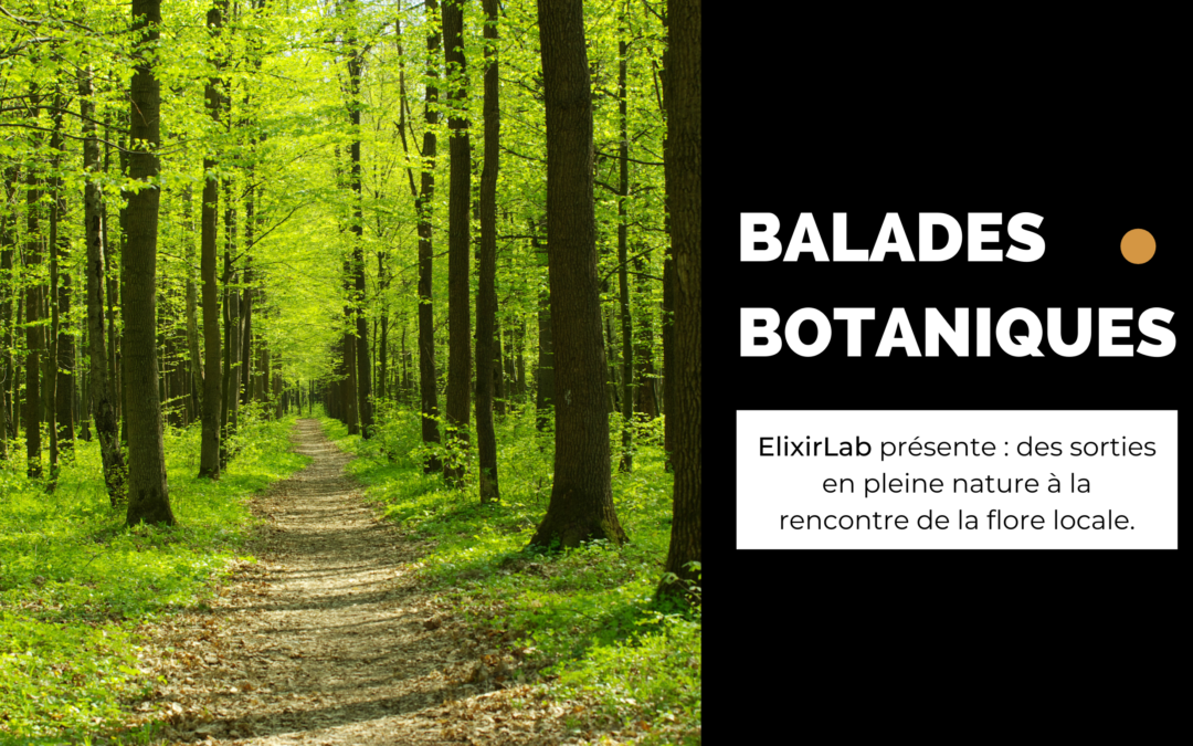 Balades botaniques – mai/juin 2021